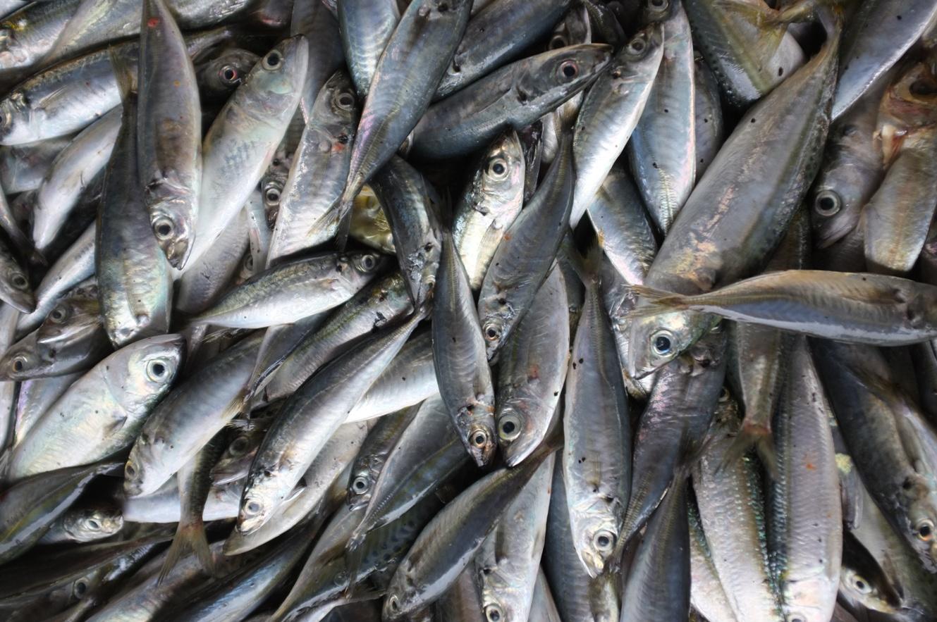 В субботу, 29 апреля, впервые пройдет всеэстонский день открытых рыбных портов