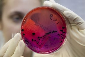 Вирус АЧС в Аудру: будут уничтожены почти 3500 свиней